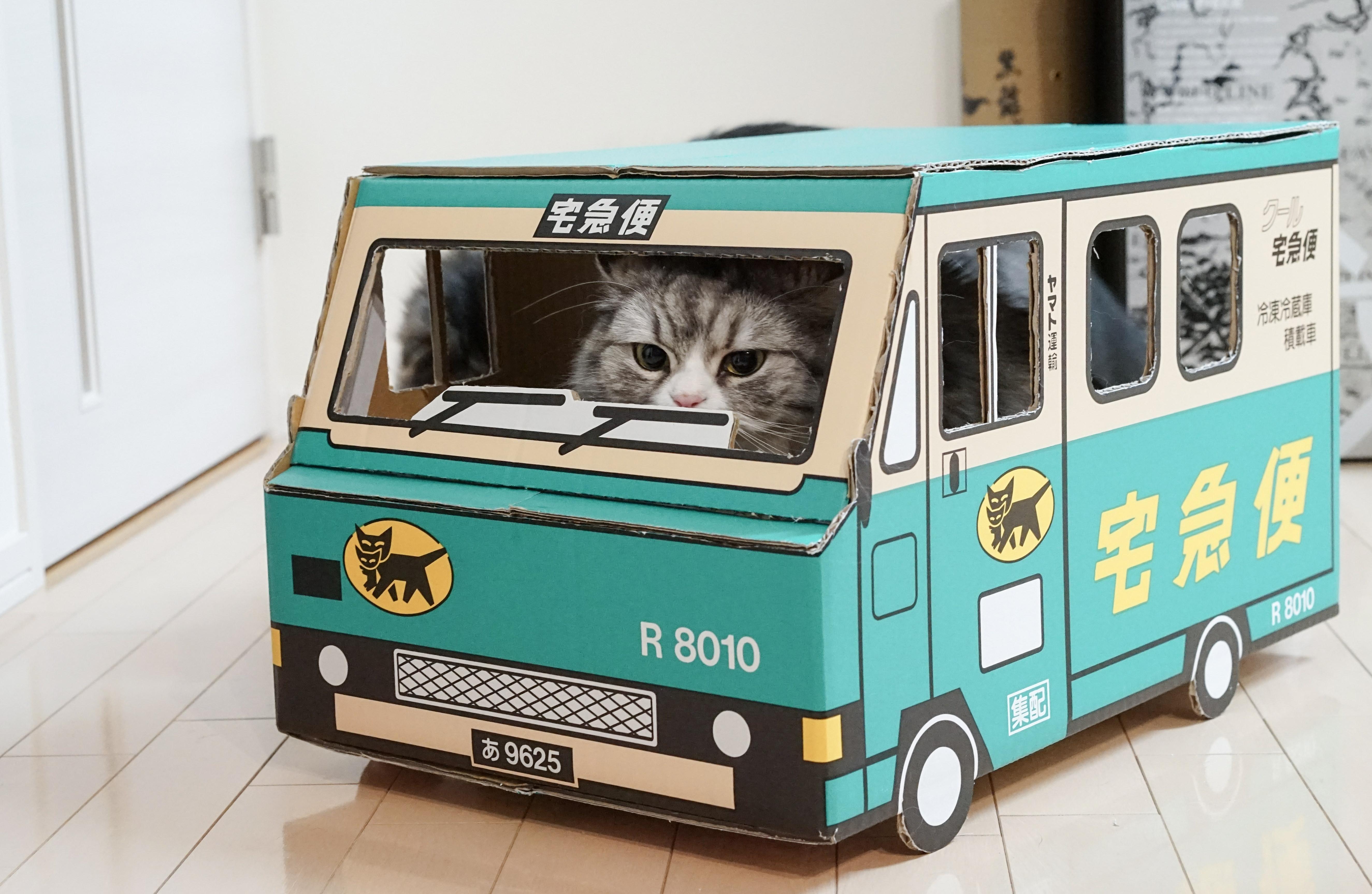 ダンボールで作られた宅急便の車の中に入っている猫